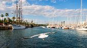 picture of vilamoura  - seagull with yachts in the port - JPG