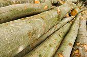 Haufen von Bauholz