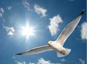 Seagull In Sunshine