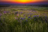 Grasses And Bluebonnets At Sunset
