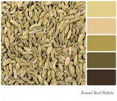 A background of dried fennel seeds in a colour palette, with complimentary colour swatches.