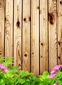 Summer background with old wooden fence, flower and green leaves