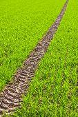 Tire Path In Field