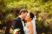 stock photo of conifers  - bride and groom in conifer trees park - JPG