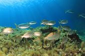 foto of school fish  - School of Fish in Mediterranean Sea - JPG