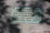 Cherry Tree Memorial for Otto Marx in Central Park New York