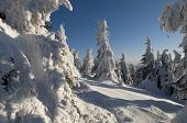 stock photo of mountain chain  - This is a clear winter day or morning in Carpathian mountains - JPG