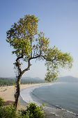 A tree overlooking one of Goa's beautiful and yet not much explored sand beaches