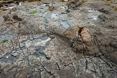 picture of curio  - Ancient petrified forest on the coast at Curio Bay - JPG