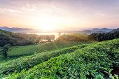 Green tea garden in sunset,China south