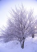 Bare Frozen Tree in Snowy Winter Field under Blue Stormy Sky