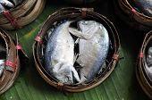 Mackerel Fish Bamboo Basket Thailand