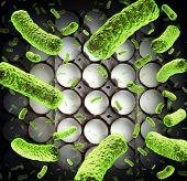 Salmonella Risk