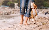 foto of puppy beagle  - Puppy beagle running near it owner legs - JPG