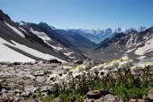 Fragile flowers, camomiles, in an environment of severe mountain tops covered with snow, the dark bl