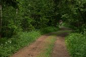 The Bicyclist On A Forest Road