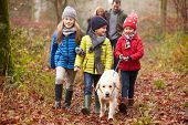 foto of 6 year old  - Family Walking Dog Through Winter Woodland - JPG