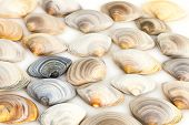 Composition Of Various Seashells