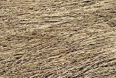 Background Of Dry Grass Texture