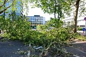 Fallen Tree Blown Over By Heavy Winds  In Dusseldorf, Germany.