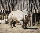 Close Up Photo Of A White Rhinoceros And Addax