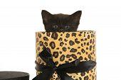 Black Kitten In Container