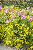 foto of planters  - Yellow and Pink Flowers in Hanging Planters in a Plant Nursery - JPG