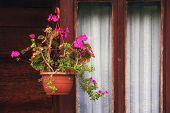 Flower Pot Hanging By The Window