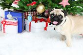 image of christmas dog  - Funny - JPG