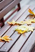 Autumn leaves on wooden bench at park