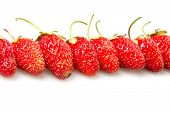 many red strawberries isolated on white