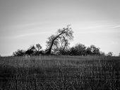 Winter Tree In Meadow