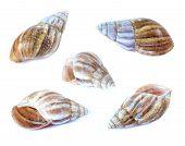Shellfish Set Isolate On A White Background