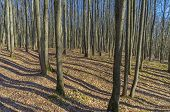Sunlit Slope In The Autumn Forest