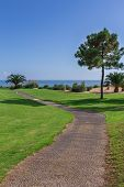 Trail In Path Of The Golf Park On A Sea Background. With Palm Trees.