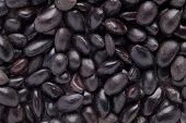 Acacia concinna seed