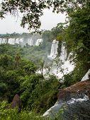 Iguazu Falls Through Foliage