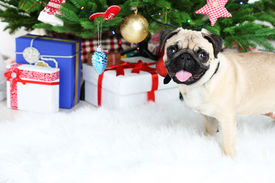 picture of puppy christmas  - Funny - JPG