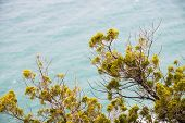 picture of vegetation  - Detail of Tuscany vegetation on the South coast - JPG