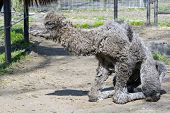 stock photo of hump  - Newborn Bactrian or two - JPG