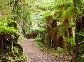 stock photo of temperance  - Road in temperate rain forest - JPG