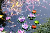 foto of koi  - Many koi swimming in a small pond with plastic lotus flowers floating on top - JPG