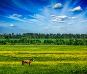stock photo of meadows  - Spring summer background  - JPG