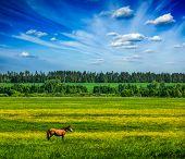 pic of  horse  - Spring summer background  - JPG