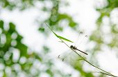 picture of dragonflies  - Close - JPG