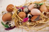 image of manger  - Speckled quail eggs and chicken eggs in the manger on a wooden background - JPG