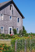stock photo of sweetpea  - This is a weathered seaside house with a garden containing sweetpeas in Maine - JPG