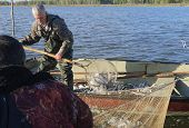 foto of fishermen  - fishermen fishing nets fish coregonus on lake - JPG