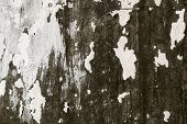 image of nail paint  - Abstract background gloomy concrete wall casually painted dark green paint weathered with cracks and scratches in the wall hammered a rusty nail - JPG