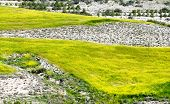 stock photo of larnaca  - Landscape background with white cliffs covered with yellow colored flowers - JPG